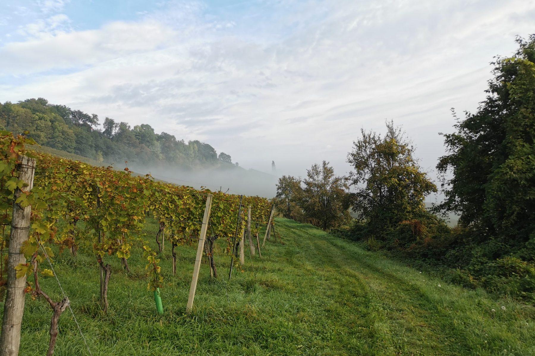 Bild Weingarten